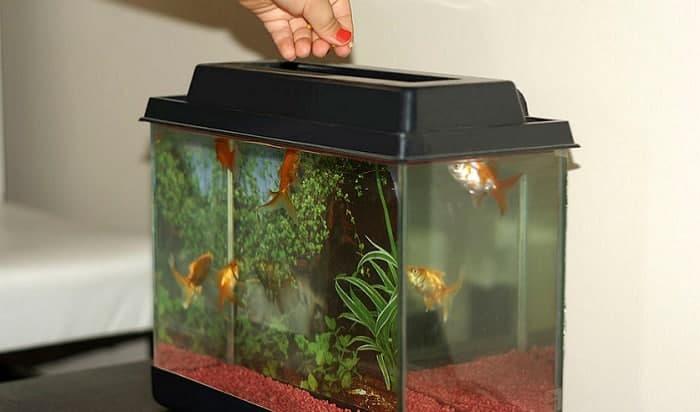 color-enhancing-fish-food-for-cichlids