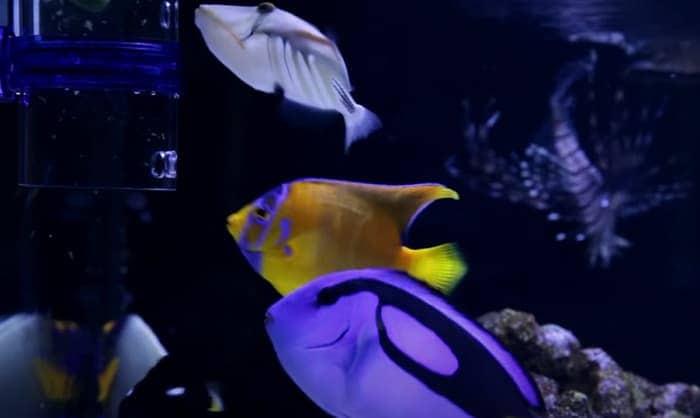 frozen-saltwater-fish-food