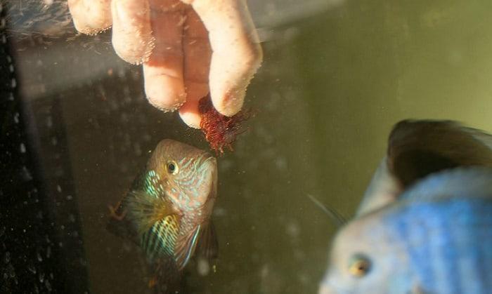 anti-parasite-medicated-fish-food