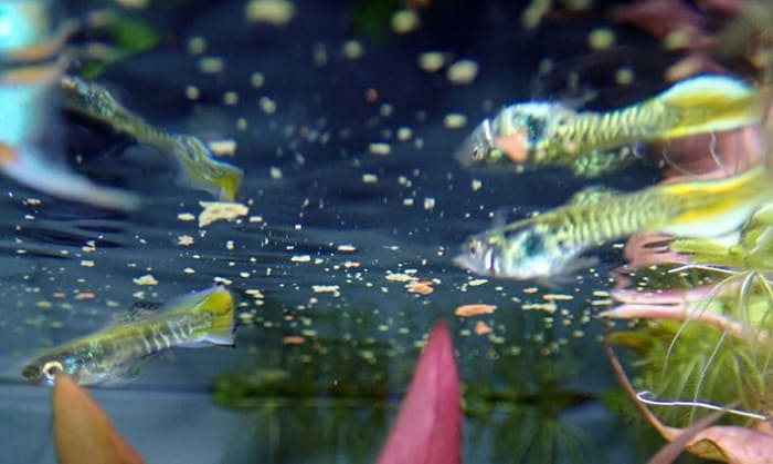 best medicated fish food